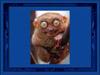 cani gatti animali visi simpatia ritocco sguardi