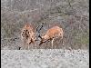 belle foto, animali, cavalli, gatti, orsi, giraffe, rinoceronte