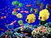 acquario nascita delfini tropici colori