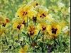 colori, tele, natura, foglie, petali, giardini, fiori, corolle