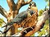 uccelli, volatili, papere, acqua, usignolo, passero, picchio, tordo, volare