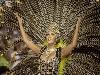 rio de janeiro, carnevale, festa, carri, samba