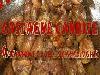 castagne, candite, marroni, feste, ricette, dolci