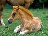 cavalli, equini, pascolo, trotto, trasposto, corse, ippica