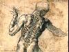 anatomia corpo umano vertebrale spina dorsale eretto