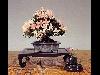 bonsai, nani, radice, taglio, alberi, cultura, annaffiare