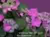 fiore, terrazza, natura, colori, amore, passione