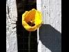giallo, sensazioni, amore, sole, calore, fare, colorare, spruzzi