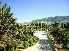 piante, floreale, colori, naturale, allegria, fascino, amore