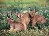 curioso, passione, felini, gatti, cani, lotta, veloci, caccia