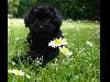 cani, amici, affetto, animali, cucciolo, cuore, imparare