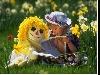 bimbi, pappagalli, io, sentimento, lato, adolescenza, peter pan