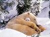 freddo nevica bianco gioco bimbi pupazzi