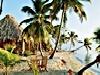 mare vacanze isole natura albero