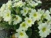 primavera, fiori, omaggio, colori, risveglio