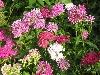 parola, fiori, petali, colori, omaggio, festa donna, mamma, dono