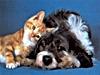 vita, animali, coppia, felini, amore, sesso, aiuto, altruismo, cuccioli