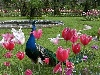 fiori prati coltivare colori stelo natura annaffiare