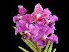 fiori,saggio vita bellezza piante