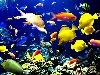 acquario pesce nuotare coralli tropicali