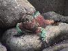 america centrale colombo scoperta mare monti antichità