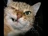 parole, gatti, cani, animali, simpatici, fumetti, pensieri, espressioni