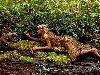 legno, foreste, opere, arte, colori, materiale, alberi