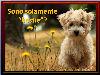 amore animali sentimento passione condividere