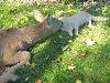 animali fattoria cani gatti felini mucca pecore racconti vita