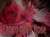 musica rose balli canore ritmo