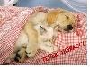 cani, gatti, affetto, abbracci, sentimento, passioni, coccole
