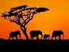 savana, tramonti, seggestione,a nimali, feroci, elefanti, sole, chiarore