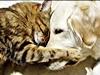 mondo animale amici uomo sentimento natura sensazioni
