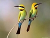 uccelli, proverbi, frasi, saggezza, cultura, cina